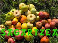 Sagartzea_logo