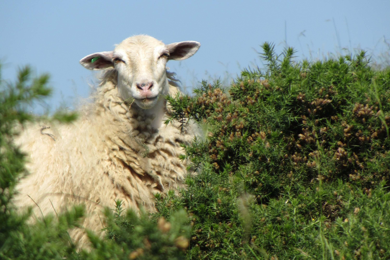 Lurzaindia : Lurraren besta – La Fête de la Terre