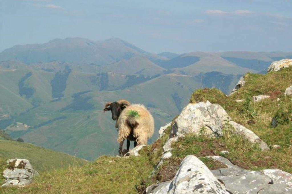 paysage montagne et mouton