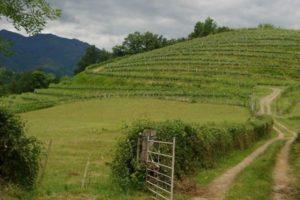 Trebatu : recherche porteur de projet en élevage à Irouleguy