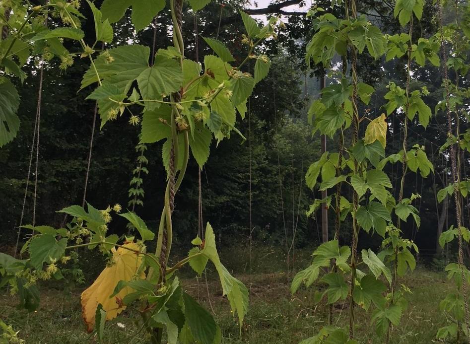 Lurzaindia – Achat de terre à St Jean de Luz