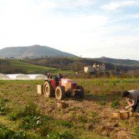 champs avec tracteur Garro