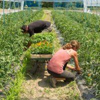 espace_test_agricole_trebatu